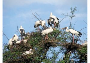 Keoladeo National Park, Bharatpur, Rajasthan, Wildlife