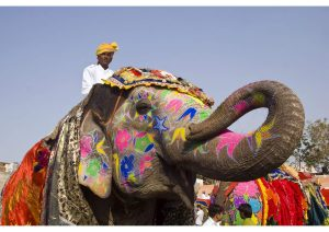 Decorated Elephant, Rajasthan, North India