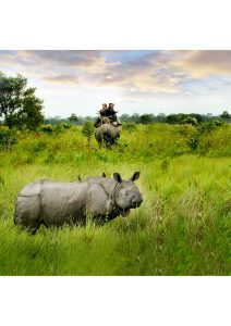 Dooars Rhino, West Bengal, Wildlife
