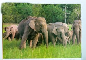 Indian Elephants, Karnataka, Wildlife