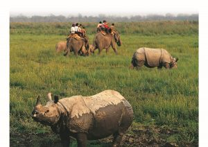 Kaziranga National Park, Assam,World Heritage Sites