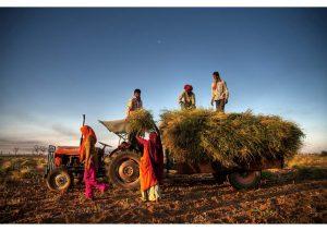 Rural scene near Jaipur, Rajasthan, Life