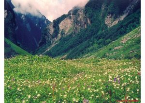 Valley of Flowers, Uttarakhand, World Heritage Sites