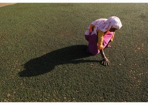 Woman Sorting Pepper, Kerala, Life